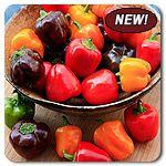 Organic Bangles Mix Mini Bell Pepper