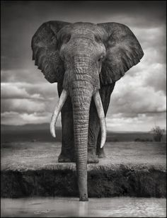 Elephant by Nick Brandt for Big Life Foundation, an organization dedicated to protecting and preserving the habitats of wild animals. They employ rangers to fight against poachers who are killing elephants and rhinos into extinction. Please read more and donate to https://biglife.org