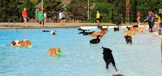 One of the most beloved activities during Lenexa's Tails on the Trails event is the dog swim. Large or small, each dog has the opportunity to jump in to the pool to cool off!