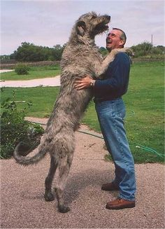 Irish Wolfhound. Someday I will live in a small house in the mountains and have this dog.