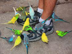 Parakeets @ Lowry Park Zoo --  Tampa, Florida