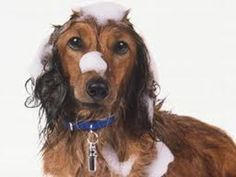 Creating the Best Homemade Dog Shampoo for Your Pup