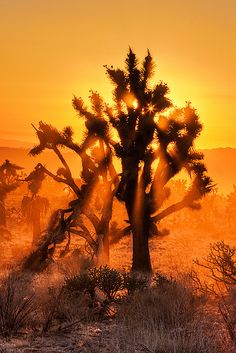 Sunset in the Mojave National Preserve, California