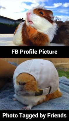 Hahahaha. How cute !