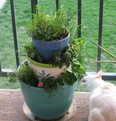 Everything tastes better with fresh herbs!