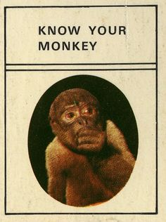know your monkey