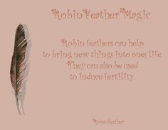 Robin feather magic *Please check your local and federal guidelines for feather collection and possession!*