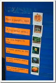 pumpkin sequence on pocket chart