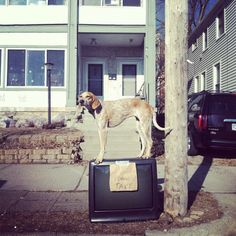 Maddie The Coonhound
