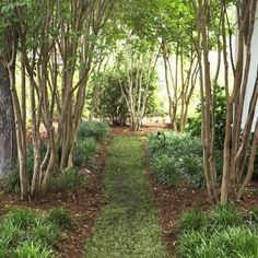 Crepe Myrtle Landscaping Design, Pictures, Remodel, Decor and Ideas