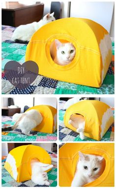 DIY Cat Tent from a T-Shirt and a Wire Hanger - love this idea! My cats kill everything, so Im forever replacing expensive cat hideaways.