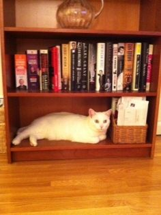 Ava knows a good reading nook when she sees it! #NYPLLittleLion