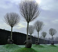 tree huggers - cold and frosty by littlestschnauzer, via Flickr