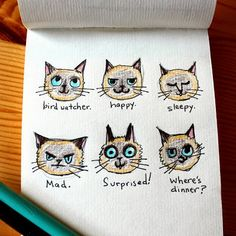 Time With Tascha - siamese cat face illustration art drawing