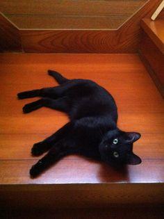 pretty kitty....