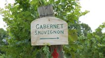 wines, wine country, dc wine, wine countri, wine tour, wine trail, loudoun counti, virginia wineri, counti wine