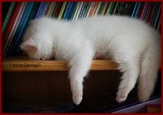 sleeping beauty, books, book worms, kitty cats, kitten, anim, pet memorials, pets, cat naps