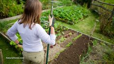 """DIY $2 self-watering garden bed - Grow produce easily, even in the toughest drought conditions 