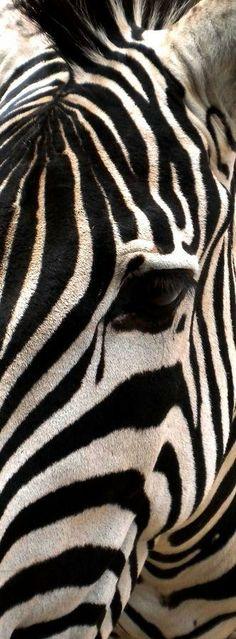Zebra | I Herd You Inspiration