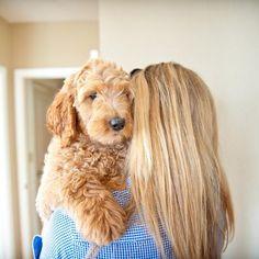 dog boarding, labradoodl puppi, puppi puppylov, doggi obsess, puppi hug