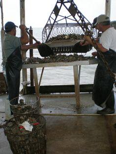 seafood thesis