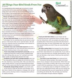 We talk a lot about what you need to know about your bird, but do you know what your bird needs from you?
