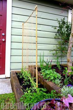 DIY bean trellis from bamboo and garden twine.