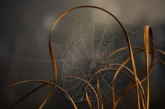 beautiful spider web and grasses