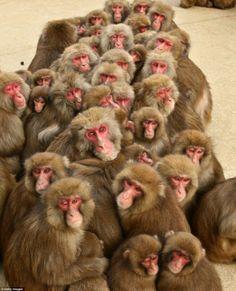 A cluster of monkeys