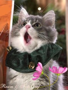 kitty caroler