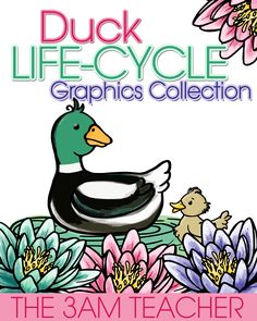 Duck Life-Cycle Custom Graphics Set!!! classroom clipart, clip art, ducks, homeschool, life cycles, graphics, scienc, line art, lifecycl