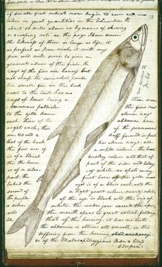 This is a drawing from the collection of stunningly beautiful field notes by Meriwether Lewis