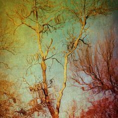 Souls of Trees