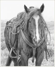 western art horse pencil drawing Take Five  I want this hanging in my house <3