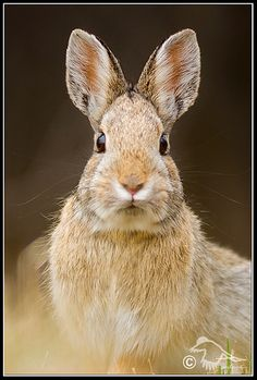 Rabbit #rabits #rabit #bunny #hares #animals #topanimals