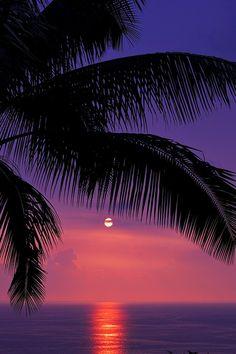Tropics...
