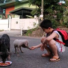 Remember The Little Boy Who Found Internet Fame After Feeding Stray Dogs? He's Trying To Make An Animal Shelter