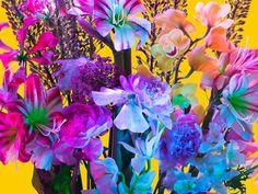 fresh 'electric blossom' photos by torkil gudnason