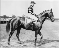 War Admiral  1934–59 The offspring of Man o' War & Brushup.He inherited his father's fiery temperament & talent,but did not resemble him physically.He was smaller than Man o' War,15.3 hands, compared to the 16.2-hand  height of his sire,with a dark brown coat.War Admiral raced in the eastern U.S.& in 1938 won 8 major races.He is linked forever to the year-older Seabiscuit, a Grandson of the Man o' War stallion,Son of Hard Tack the preeminent horse based in the western U.S.