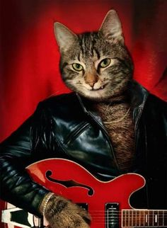 The coolest Guitar Cat ever.