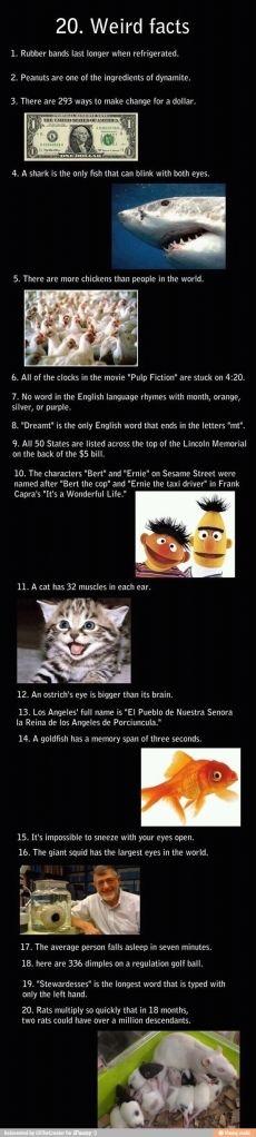 Weird facts #infographic