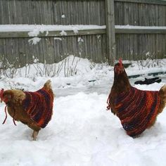 just in case you're having a bad day ...here are some chickens in sweaters