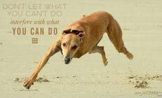 ~ Don't let what you can't do interfere with what you can do!