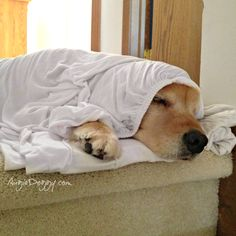 I like to nap in the bed sheets before mom washes them!