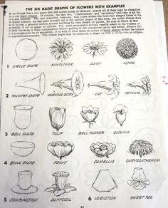 6 basic shapes of flowers