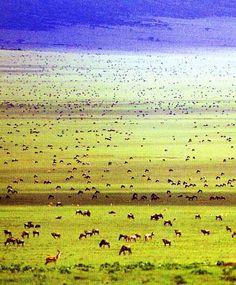 Serengeti National Park,Tanzania: