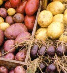 Rodfrugtsuppe opskrift - Gratis opskrift på rodfrugt suppe