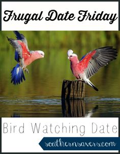 Looking for a frugal date idea?  Go bird watching!