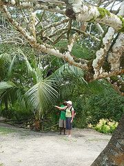 Volunteer Abroad Belize www.gooverseas.com | Intern, Teach, Volunteer, Study Abroad | Make your dreams a reality!