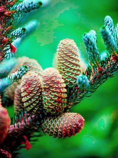 Choose Outstanding Plants plant, tree, color, garden tips